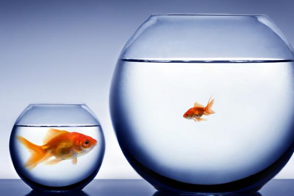 Big-fish-small-pond-shutterstock_8451121