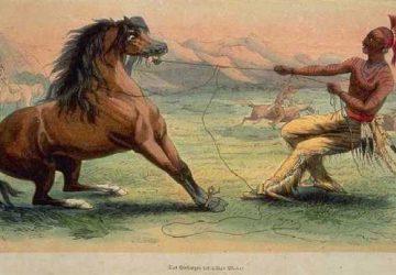 taming-a-horse